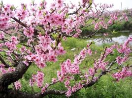 Top 10 Bài thơ hay về mưa xuân