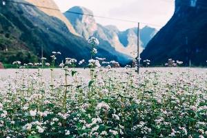 Top 10 Loài hoa bung nở rực rỡ, đặc trưng và đẹp nhất vào mùa đông